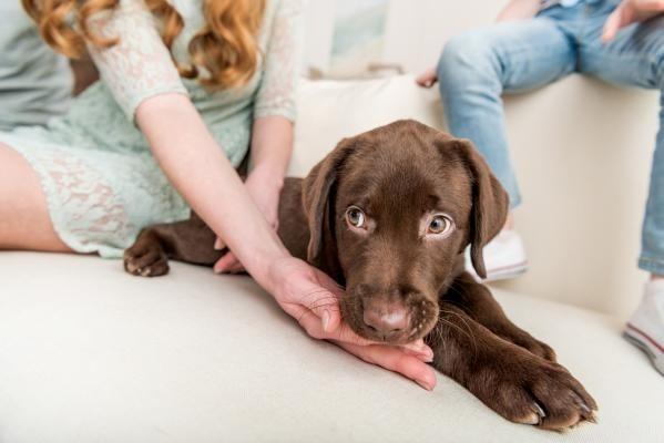 Tutoriál: Máme doma štěně