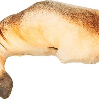 KARE Design Polštář Shape Dog 43×70 cm - hnědý