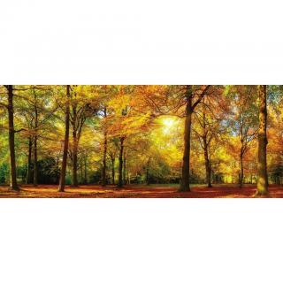 OBRAZ SKLENĚNÝ, krajina & příroda, 50/125 cm, - vícebarevná 50/125
