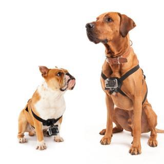 Postroj na psa pro LAMAX ACTION X