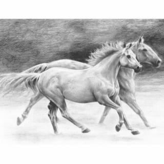 Royal & Langnickel Kreslení podle předlohy A4 Koně