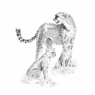 Royal & Langnickel Kreslení podle předlohy A4 Leopard