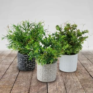 Umělá rostlina zimostráz, 3 ks