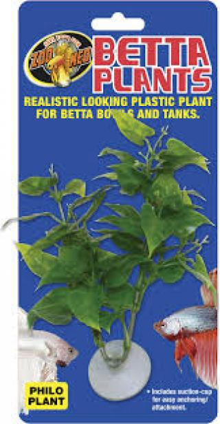 Zoomed Betta Plant – Filodendron